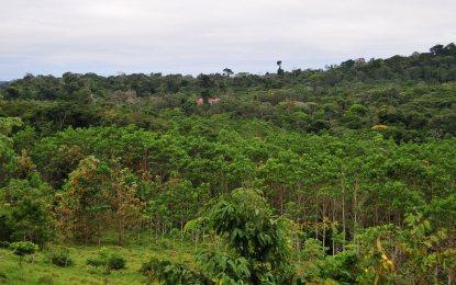Peugeot-ONF: 15.000 alberi in più in Mato Grosso