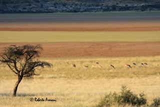 La Namibia e il Botswana di Evolution Travel