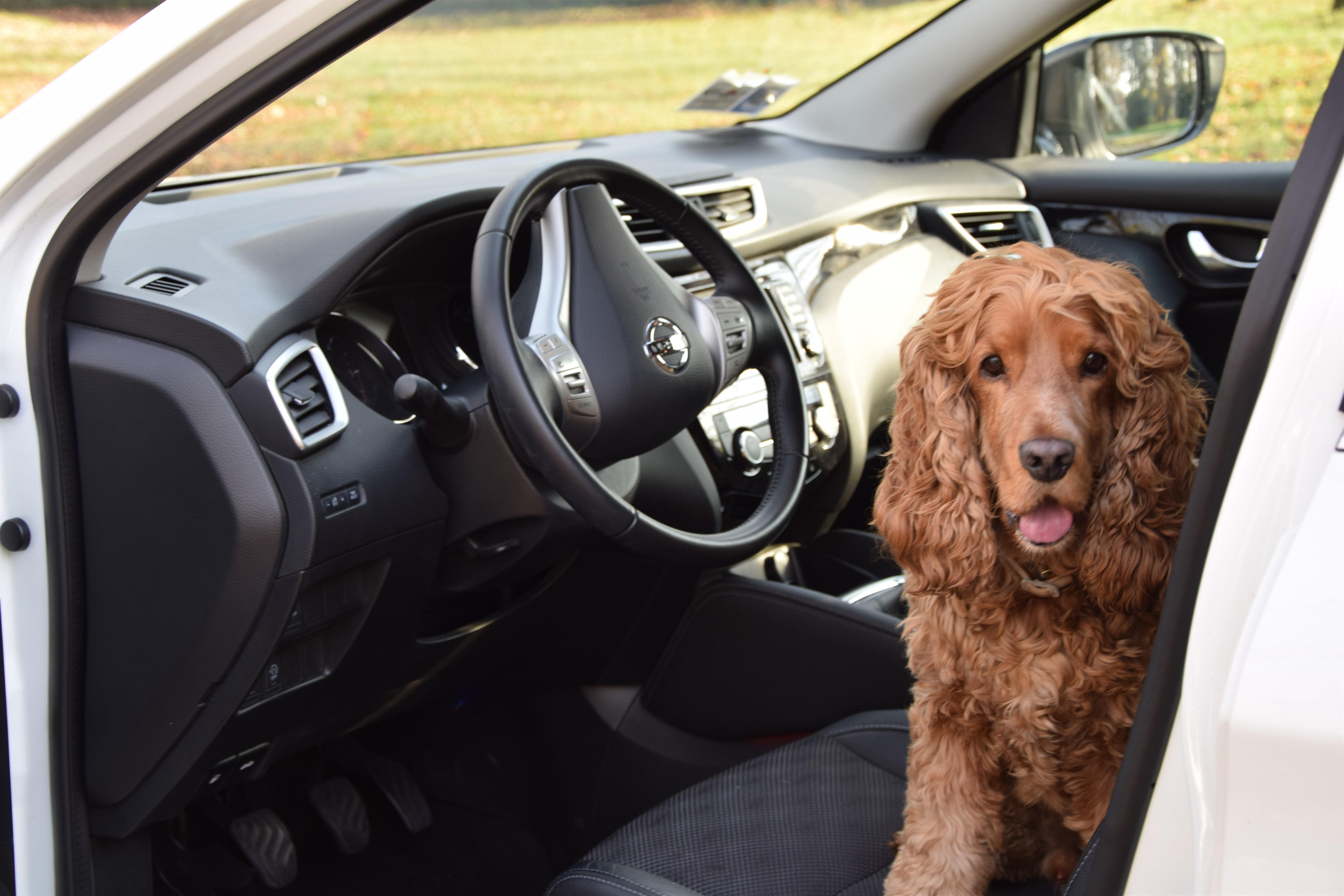 Il cane (e il gatto) e Nissan Qashqai