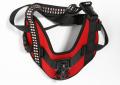 Activeon lancia la nuova 360 Dog Vest