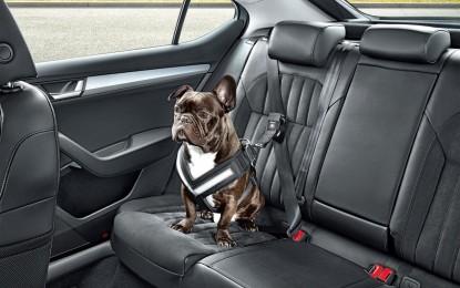 ŠKODA e la sicurezza in auto degli amici a 4 zampe
