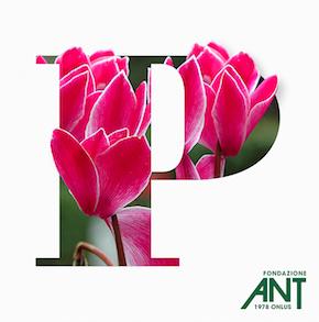 Tornano i ciclamini per sostenere Fondazione ANT