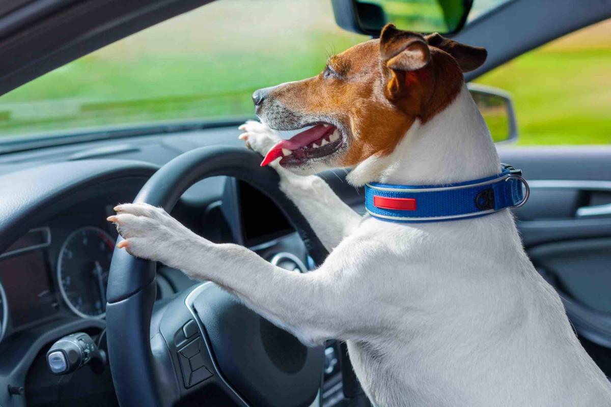 Viaggiare con il cane: consigli da Arexons