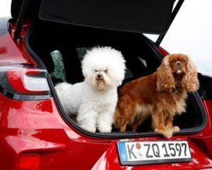 Ford coccola i cani nel MegaBox di nuova Puma